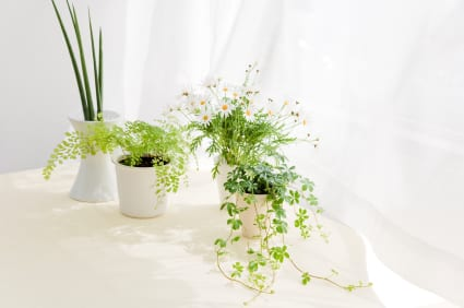 Smart Ideas For Healthier Air At Home