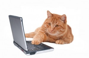 Cat working at the computer