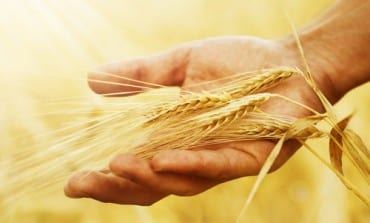 What if it's not the gluten that is causing your gut trouble?