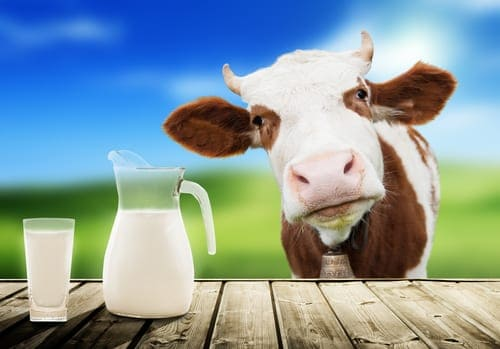 Dairy – Why It Is Problematic For Most People