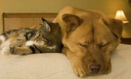 How the world looks, sounds and smells different to our pets