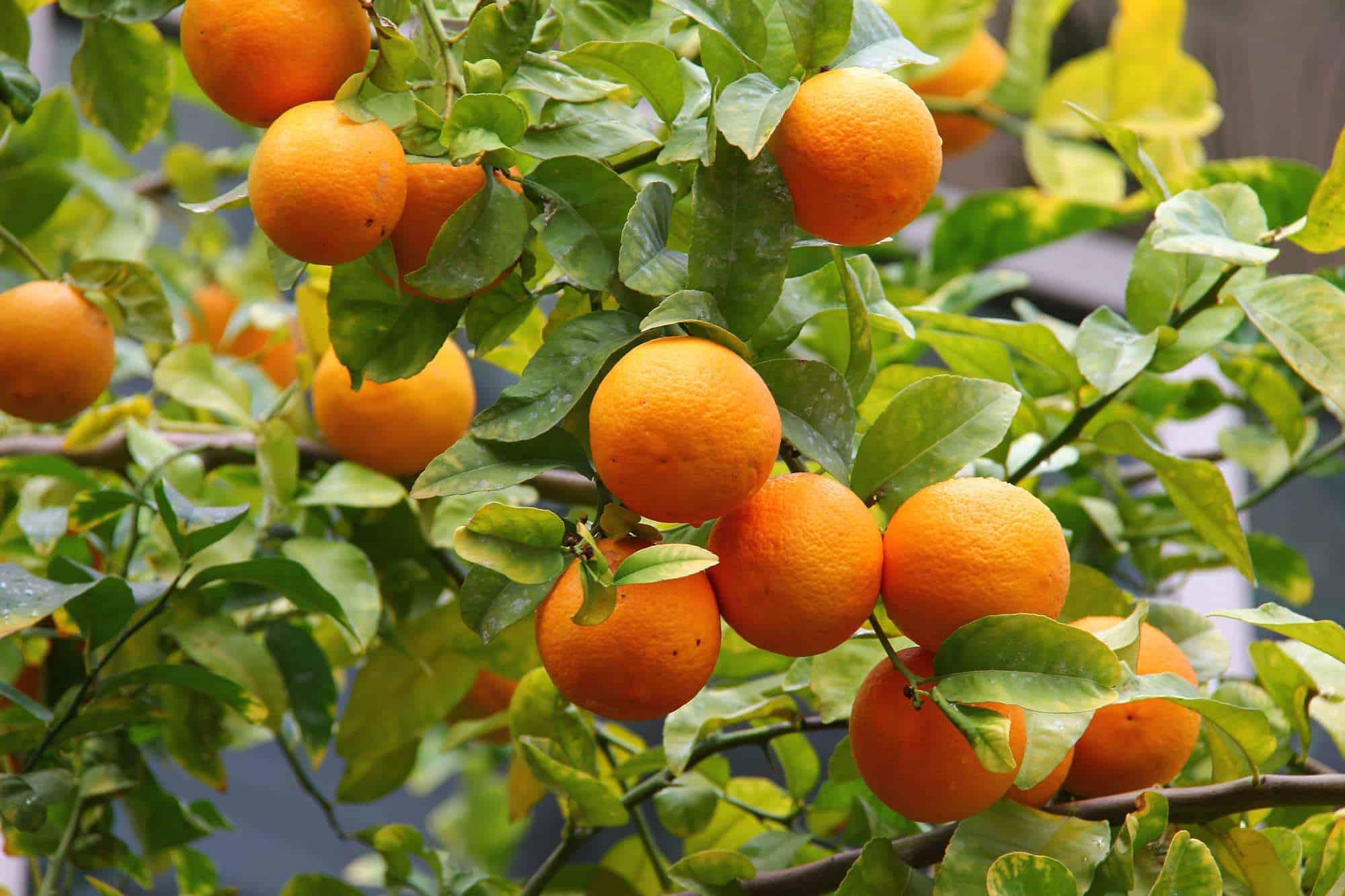 Has Your Orange Juice Been Hijacked?